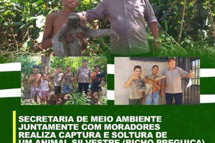 Secretaria de Meio Ambiente realiza resgate de animal silvestre